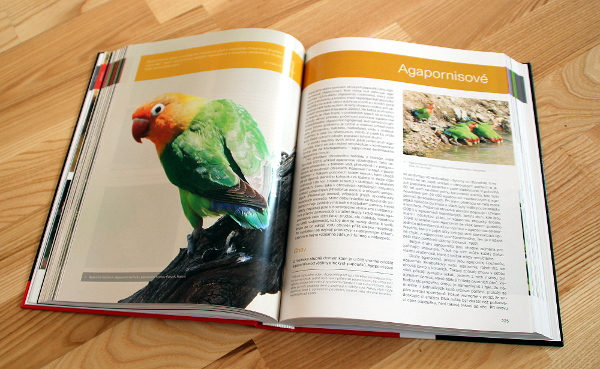 Průvodce chovem papoušků se věnuje jak vzácným, tak velmi často chovaným papouškům (Foto: Jan Potůček, Ararauna.cz)
