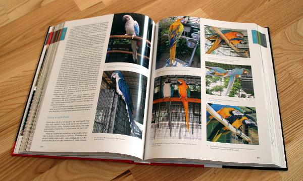 Unikátní snímky barevných mutací velkých arů (Foto: Jan Potůček, Ararauna.cz)