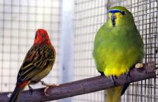 Přehled ptačích burz a výstav pro víkend 29. až 31. května 2015