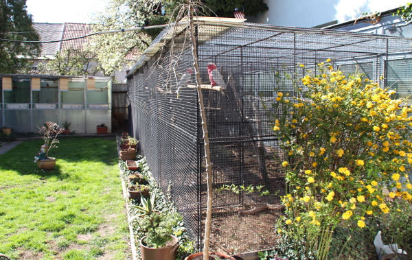 Pohled na voliéry s velkými papoušky, v popředí přírodní pár kakaduů růžových (Foto: Jan Potůček, Ararauna.cz)