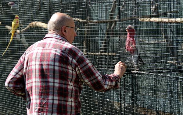 Rudolf Strnad dává papouškům pamlsek - buráky (Foto: Jan Potůček, Ararauna.cz)