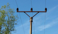 Smrt ararauny na drátech vysokého napětí: nepodceňujte výcvik volně létajících papoušků!