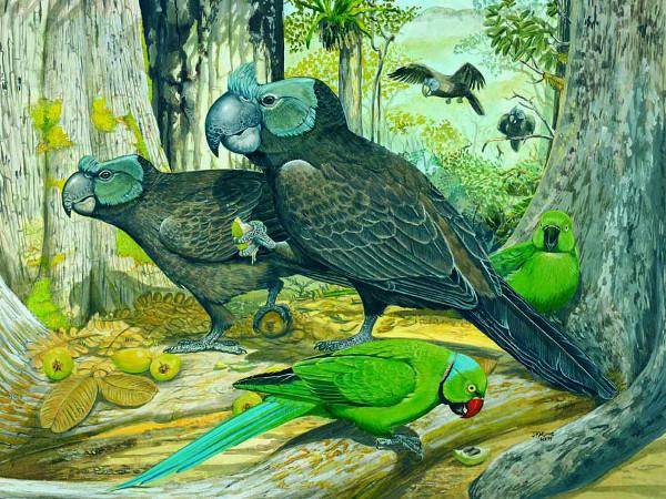 Předpokládaná podoba papouška širokozobého předtím, než byl objeven deník Johannese Pistoria. Na obrázku je i alexandr mauricijský, který na ostrově přežil dodnes. (Foto: Julian Hume/London Natural History Museum)
