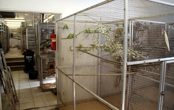 Pohled na voliéru s původními přírodními andulkami z Austrálie, které pochází ze Zoo Kolín nad Rýnem (Foto: Jan Potůček, Ararauna.cz)