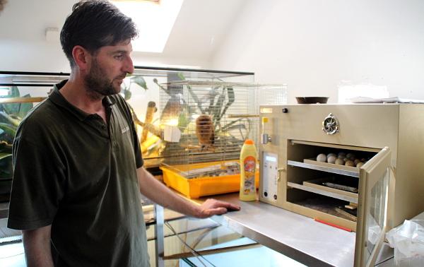 Milan Hřebík nám ukazuje v odchovně plzeňské zoo líhně plné vajec (Foto: Jan Potůček, Ararauna.cz)