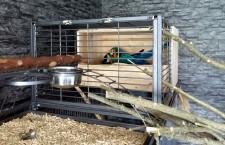 Dojde k českému prvoodchovu araraun v obýváku? V šumperském paneláku se k němu schyluje