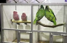 Přehled ptačích burz a výstav pro víkend 30. července až 1. srpna 2021