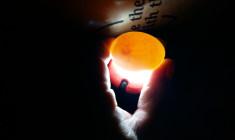 Hnízdění šumperských araraun v paneláku: všechna vajíčka oplozena, budou trojčata!