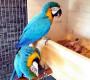 Jak pokračuje hnízdění araraun v šumperském paneláku? Rodiče zvládli stěhování budky