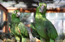 Přehled ptačích burz a výstav pro víkend 28. až 30. srpna 2015