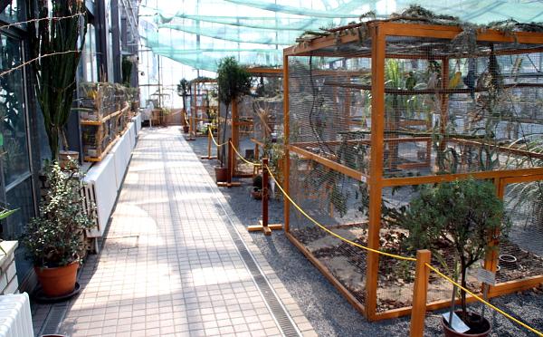 Ve sklenících není o moc větší teplo než venku, pořadatelé pravidelně rosí voliéry i klece (Foto: Jan Potůček, Ararauna.cz)