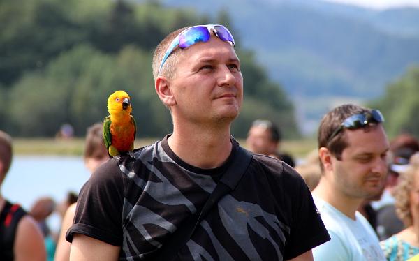 Na Krásném nebyli jen velcí papoušci, volně zde létal i aratinga jendaj (Foto: Jan Potůček, Ararauna.cz)