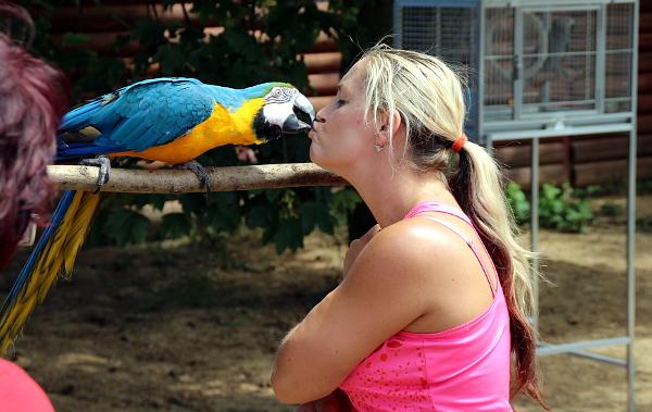 Arové jsou velmi kontaktní ptáci. Upínají se ale zpravidla jen na jednoho člověka. (Foto: Jan Potůček, Ararauna.cz)