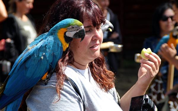 Výjimkou nebyli ani chovatelé s dvěma a více papoušky (Foto: Jan Potůček, Ararauna.cz)