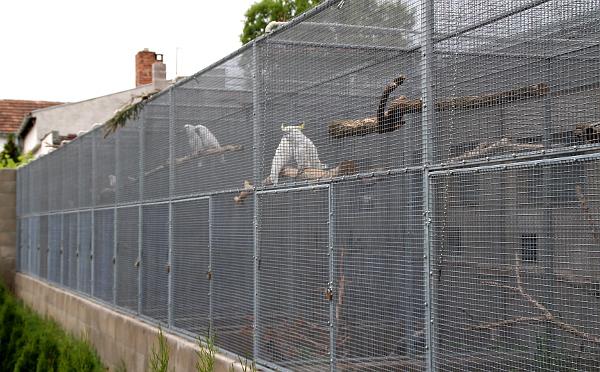 Všichni papoušci mají k dispozici dostatečné prostorné výlety (Foto: Jan Potůček, Ararauna.cz)