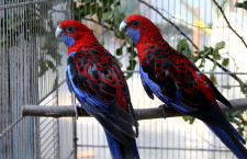 Přehled ptačích burz a výstav pro víkend 3. až 5. ledna 2020