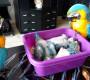 Hnízdění araraun v paneláku: jak jsme zastavili škubání prachového peří u mláďat