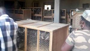 Pašovaní žakové v Dakaru