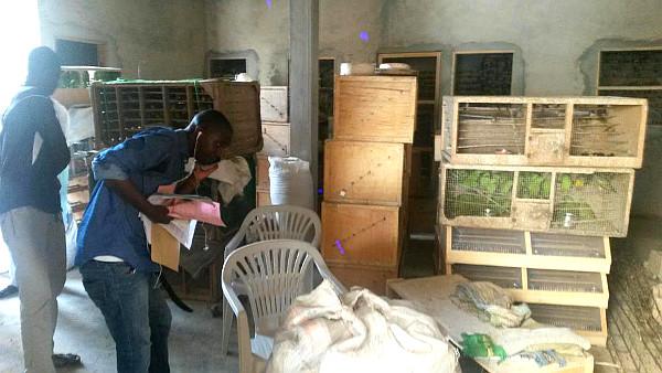 Kromě žaků muž pašoval i alexandry malé a papoušky senegalské (Foto: WARA)