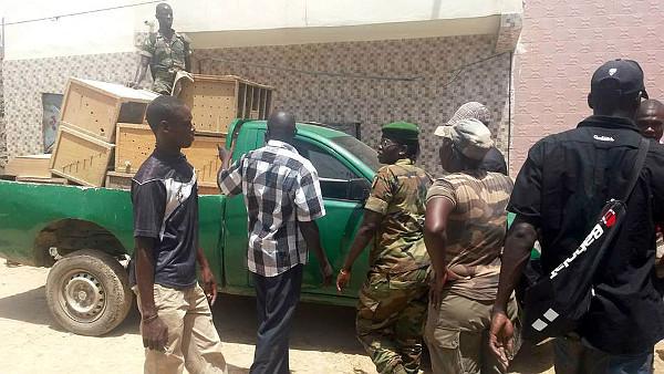 Senegalská policie nakládá zabavené papoušky (Foto: WARA)