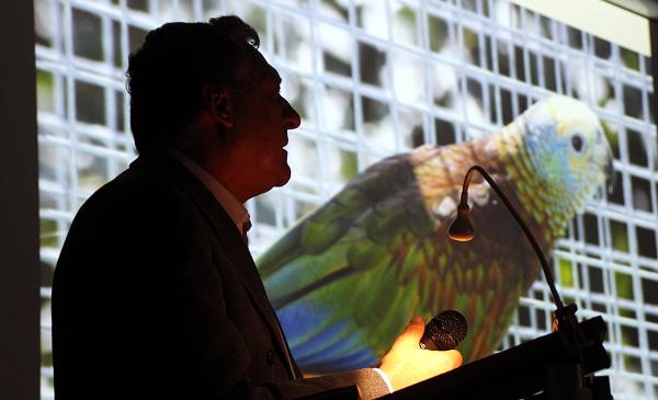 Přednášku Jana Nedělníka provázely unikátní snímky z jeho chovu, například i tohoto amazoňana ohnivého (Foto: Jan Potůček, Ararauna.cz)