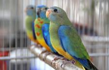 Přehled ptačích burz a výstav pro víkend 24. až 26. května 2019