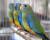 Přehled ptačích burz a výstav pro víkend 4. až 6. září 2015