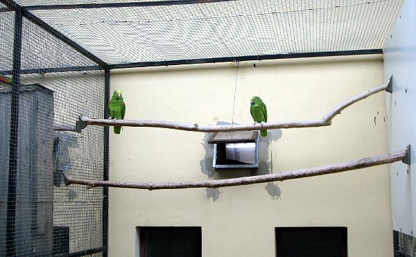 Vyplatí se myslet na obklady průletových oken, protože tato místa bývají první na ráně, když se papoušci rozhodnou okusovat omítku (Foto: Jan Potůček, Ararauna.cz)