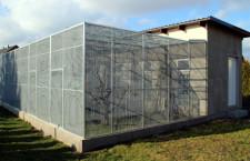 Stavíme voliéry pro papoušky (1.): Volba správného umístění a typu stavby