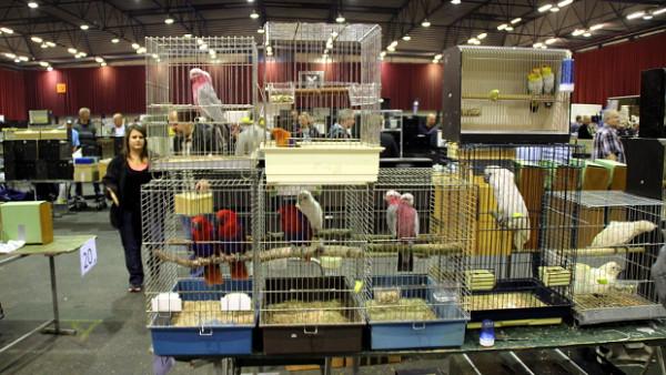 Přehled ptačích burz a výstav pro víkend 28. února až 1. března 2020