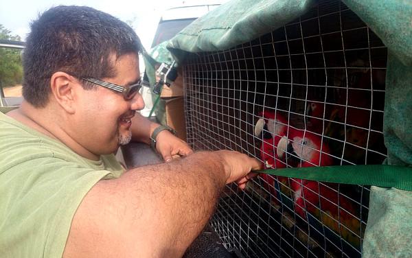Dr. Fernando Martinez se loučí s ary arakangami, o které se staral po celou dobu jejich chovu v zajetí (Foto: ARCAS)