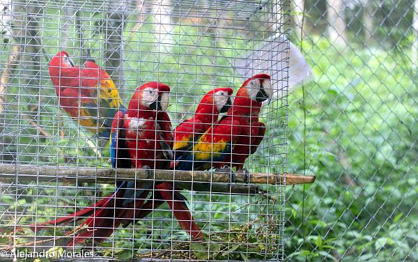 Poblíž místa vypuštění v guatemalském národním parku Sierra del Lacandón (Foto: ARCAS)