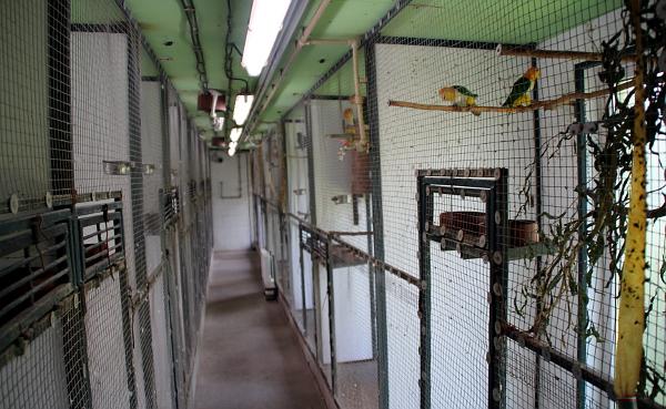 Pohled do zázemí chovného zařízení pro amazoňany a amazónky (Foto: Jan Potůček, Ararauna.cz)