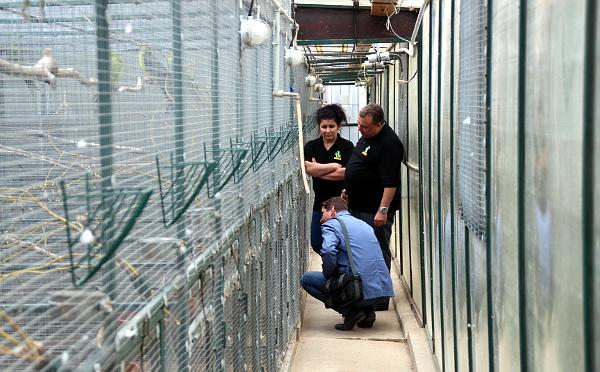 Řada voliér pro australské papoušky, s manželi Jarošovými přihlíží vydavatel časopisu Nová Exota Jan Sojka (Foto: Jan Potůček, Ararauna.cz)