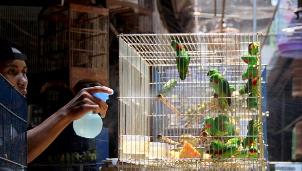 Videa z obrovských ptáků