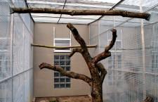 Stavíme voliéry pro papoušky (5.): volba pletiva, topení a dokončovací práce