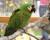 Přehled ptačích burz a výstav pro víkend 20. až 22. listopadu 2015