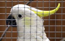 Přehled ptačích burz a výstav pro víkend 14. až 16. června 2019