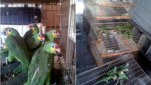 Zabavení papoušci v Mexiku