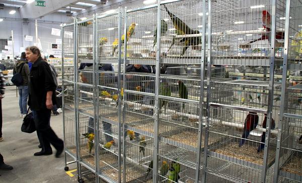 Většina ptáků na Reggiu Emilia byla v úhledných klecích, prodej z přepravek byl minimální a praktikovali ho spíš chovatelé drobných exotů (Foto: Jan Potůček, Ararauna.cz)