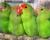 Přehled ptačích burz a výstav pro víkend 4. až 6. prosince 2015