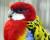 Přehled ptačích burz a výstav pro víkend 22. až 24. listopadu 2019