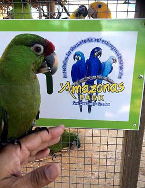 Arara zelený v Amazonas parku na Krétě (Foto: archiv Patricia Do Nascimenta)
