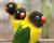 Přehled ptačích burz a výstav pro víkend 5. až 7. února 2016