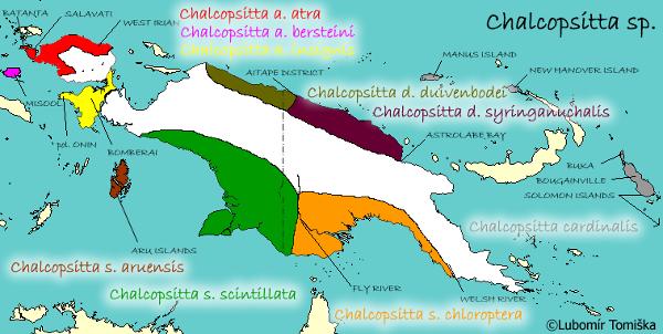 Výskyt zástupců rodu Chalcopsitta ve volné přírodě (Zdroj: Lubomír Tomiška)