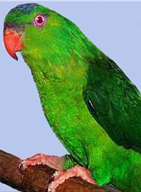 Charmozin zelený