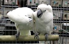 Přehled ptačích burz a výstav pro víkend 12. až 14. července 2019