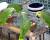 Magdalena Žohová: Venkovní voliéru pro papoušky v Botanické zahradě zprovozníme nejdříve v březnu