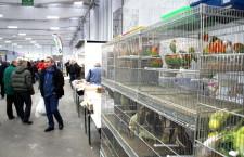 Ani italská ptačí burza a výstava v Reggio Emilia, kam jezdí hodně českých chovatelů, se letos neuskuteční