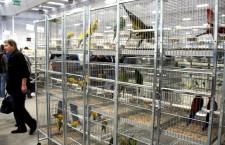 Ptačí burzy a výstavy jsou zpět! 30. dubna skončí jejich celostátní zákaz